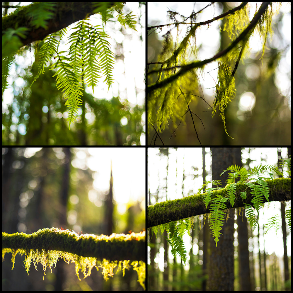 Moss and fern xcexnm