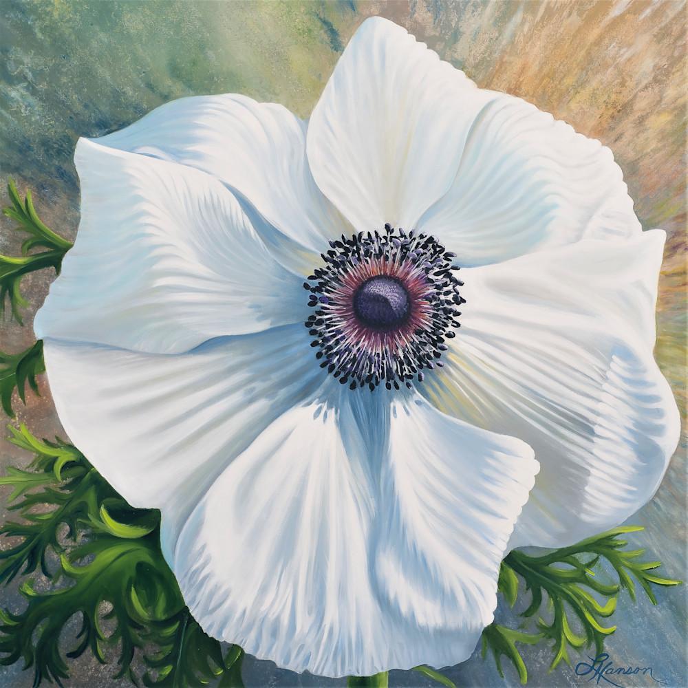 White poppy anemone 2 kmprt0