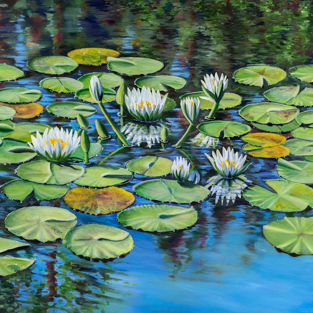 White waterlilies nncdj0