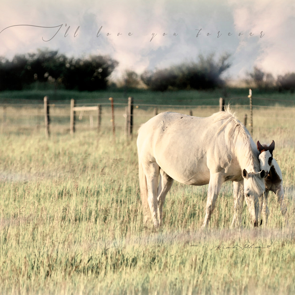 Horse and colt lean s d6ht5g