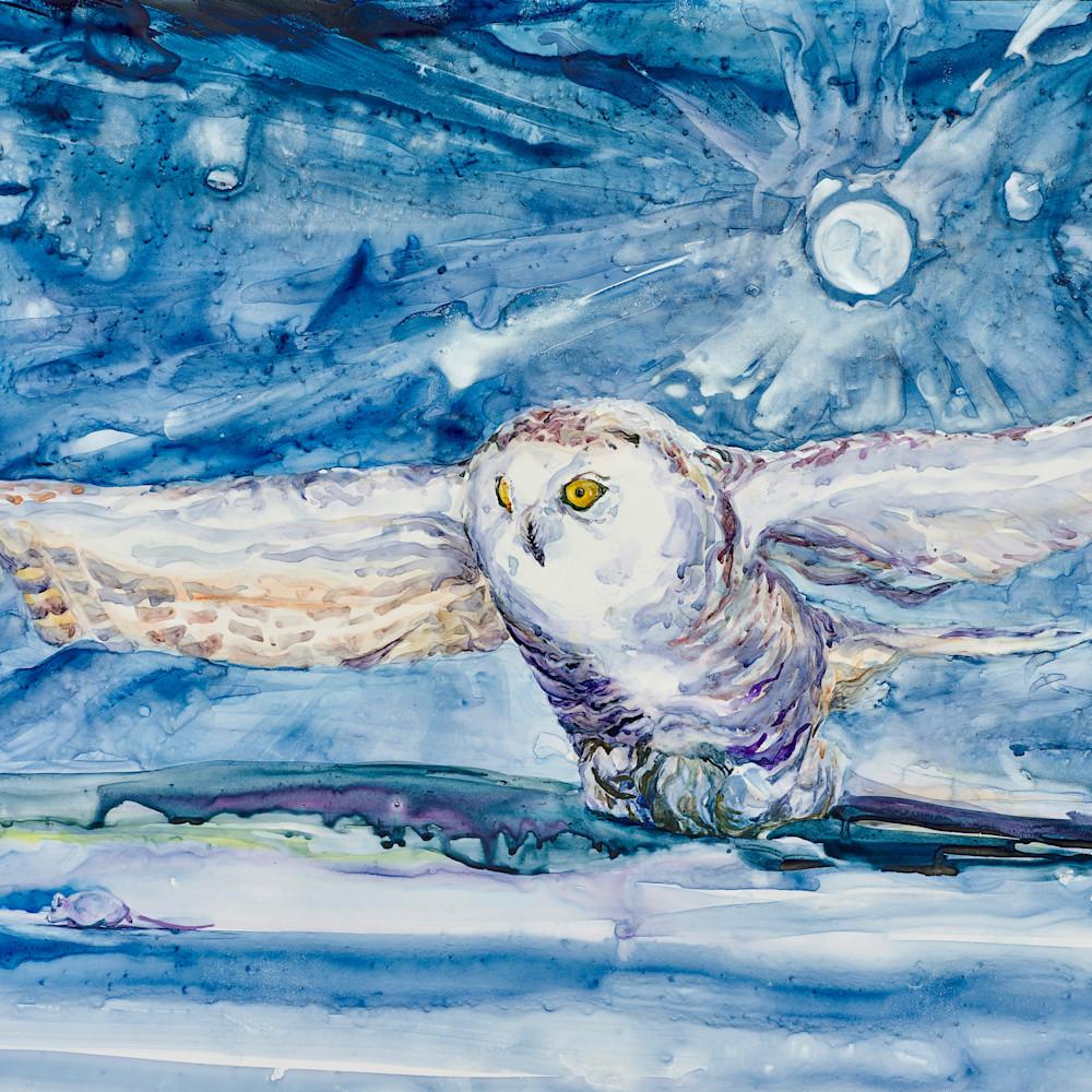 Snowy owl kijjmw