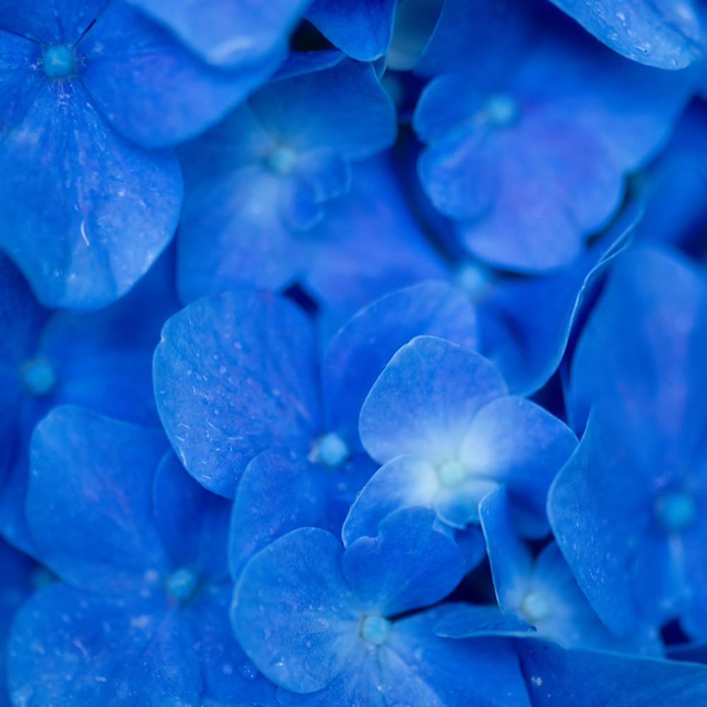 Legacies of blue koouqh
