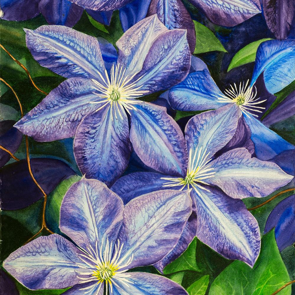 Purple clematis zxfol5