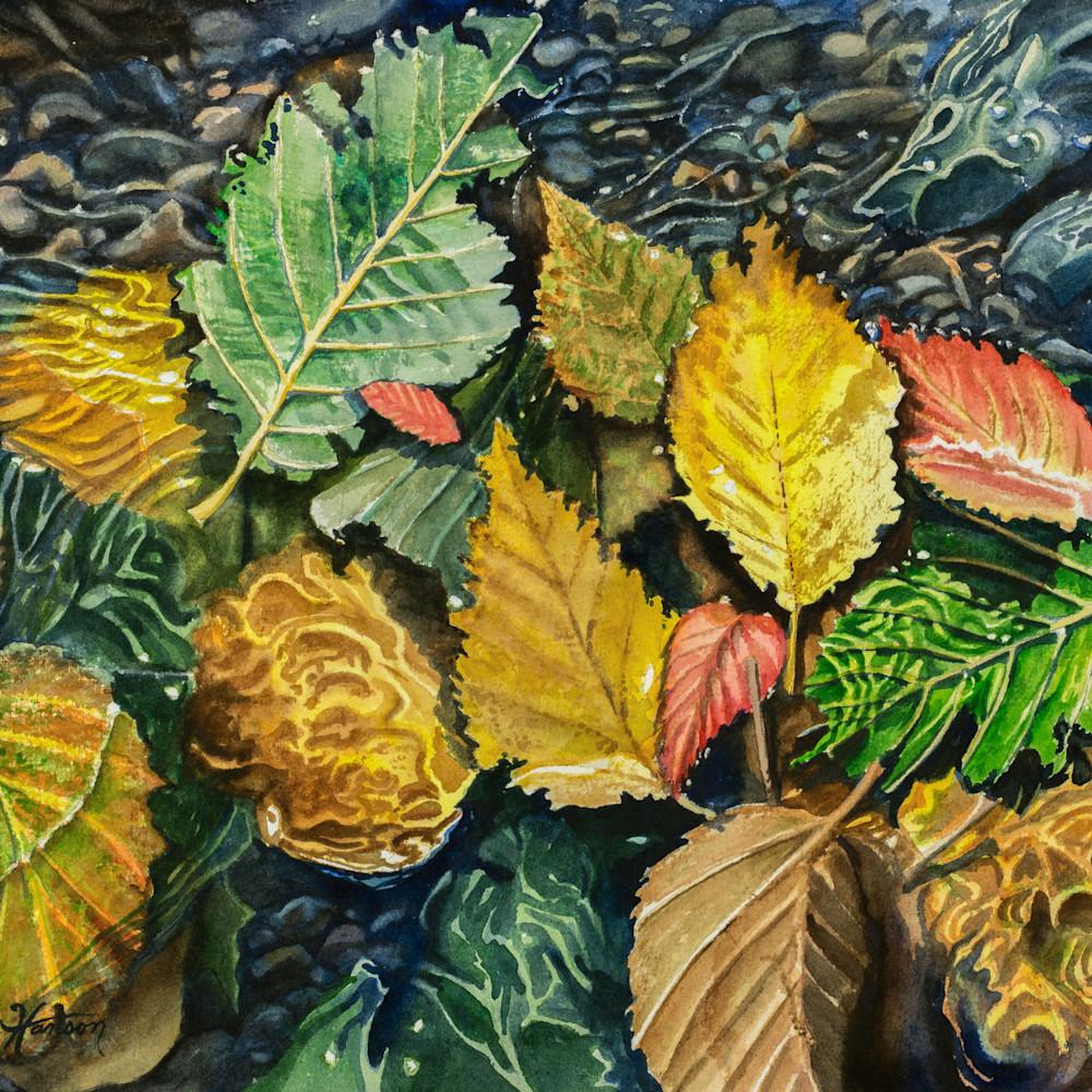 Wet leaves ofllzs