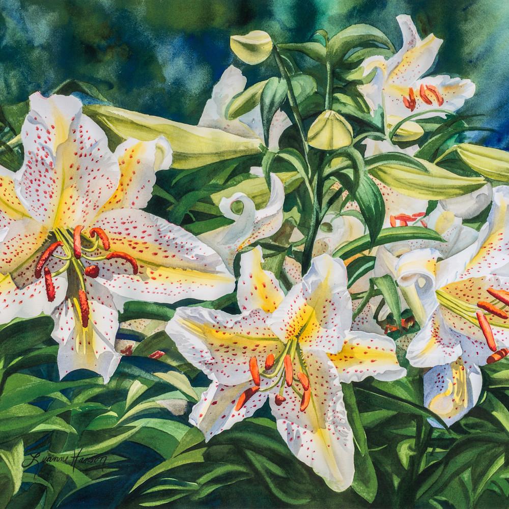 White lilies t0qjq5