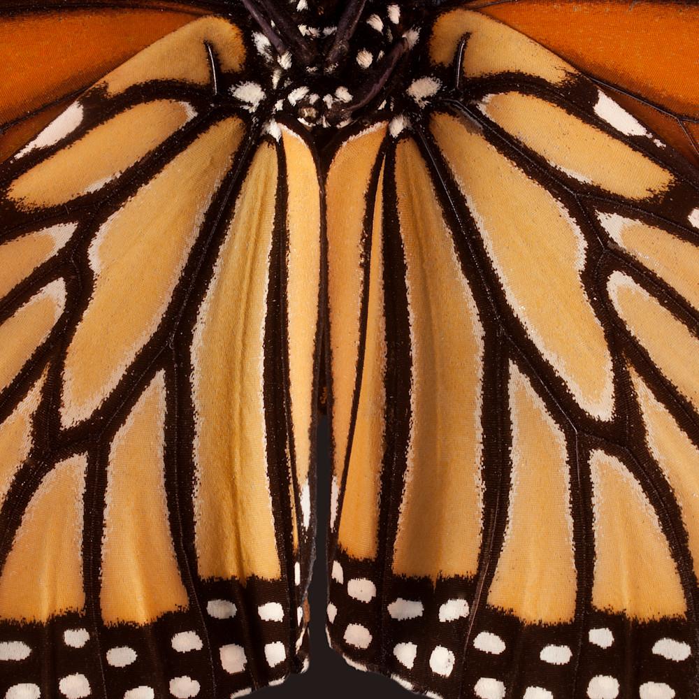 2021 07 08a 010 monarch s1qlek