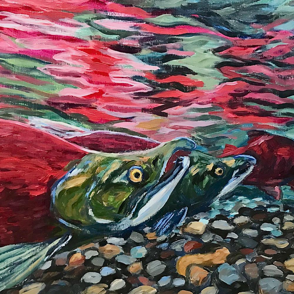 Red salmon in stream zdfppi
