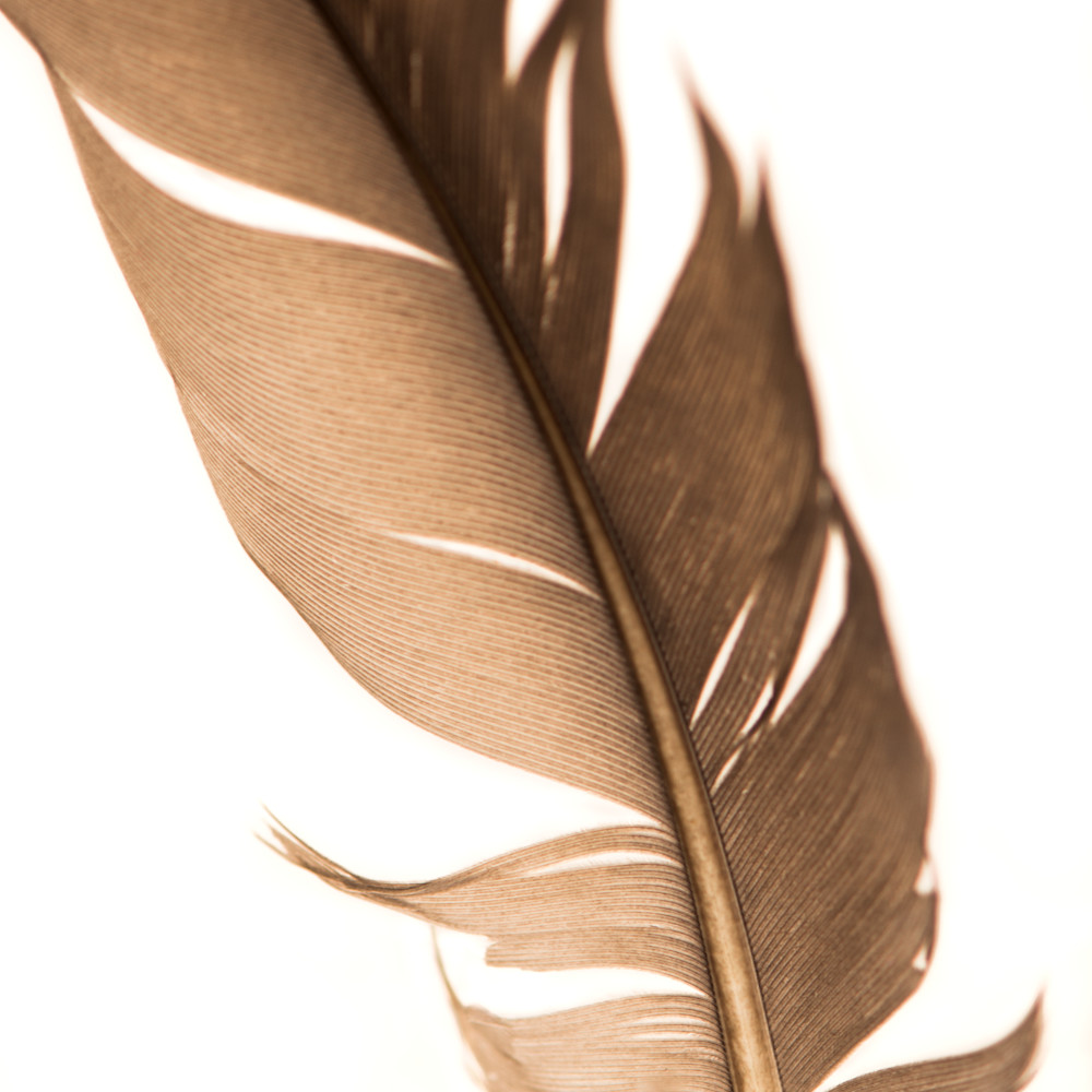 Feathers3 purcvw