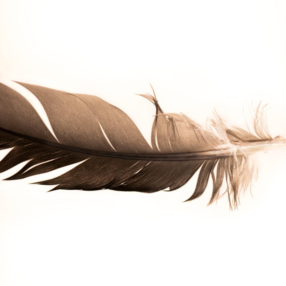 Feathers2 1 bdinmz