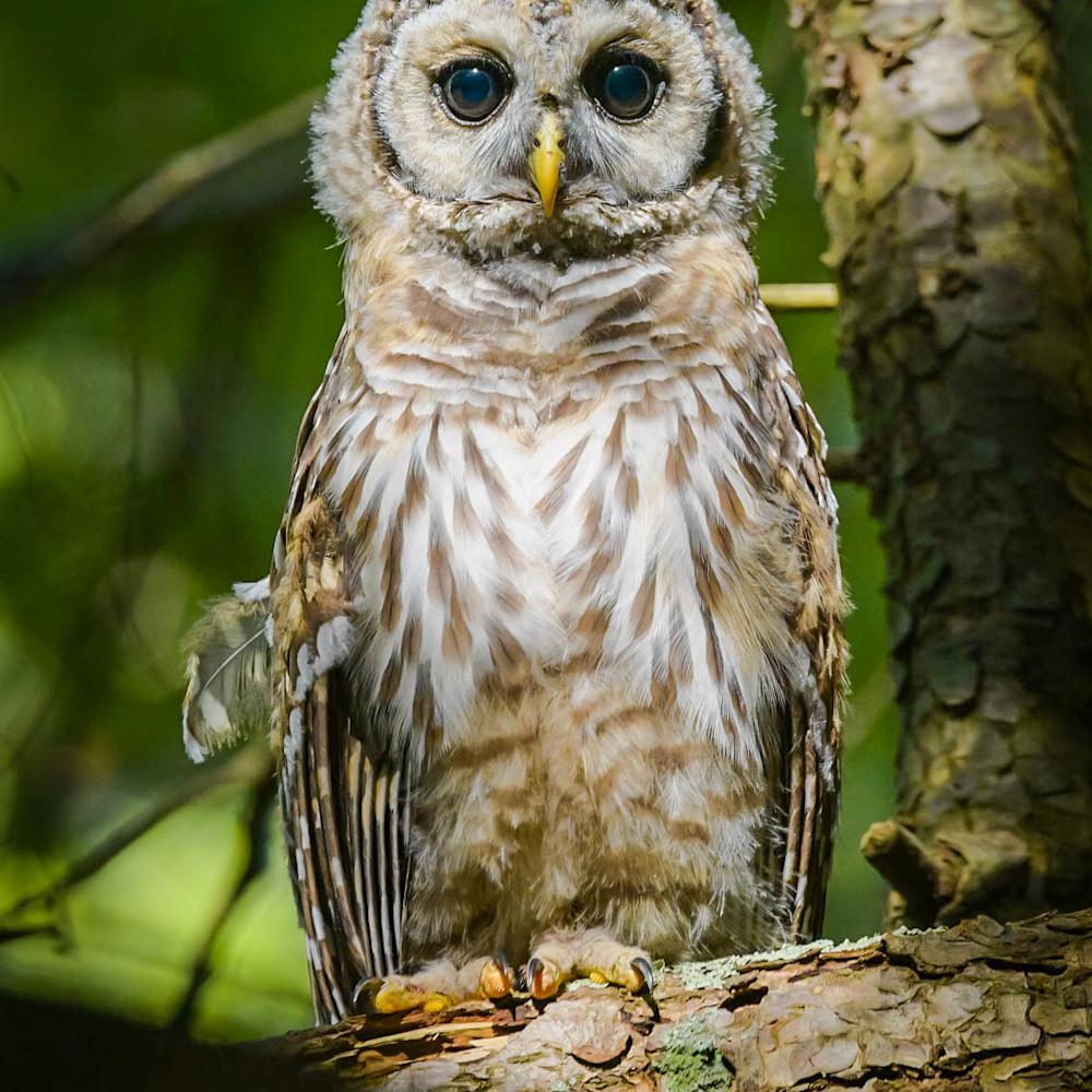 Iris owl jiykmg