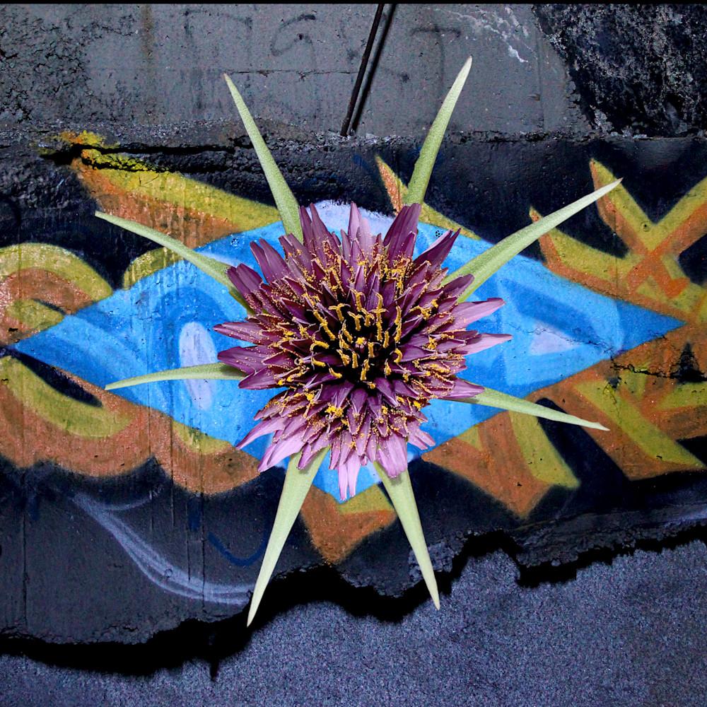 Star flower cy6md6