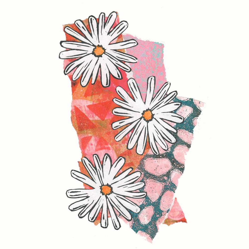 Three daisies sxdnpx