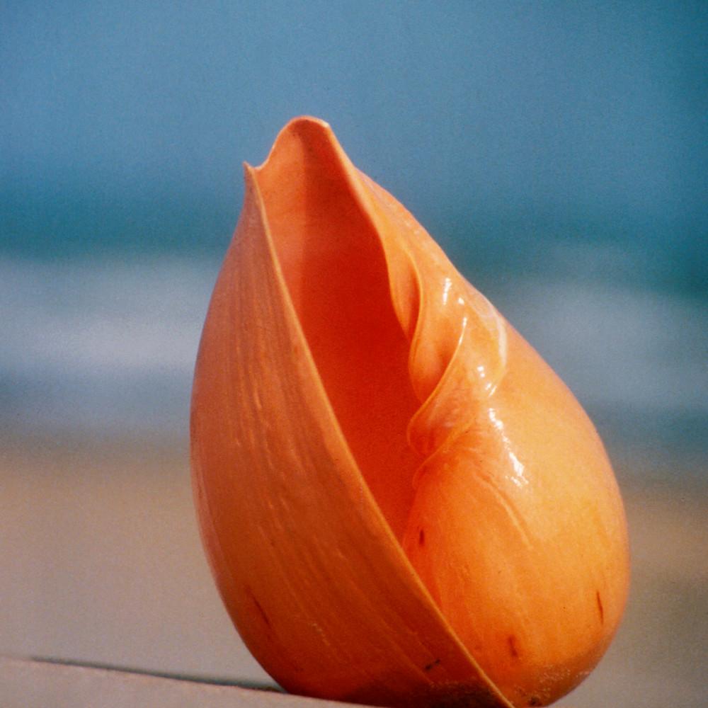 116 melon shell by ruth burke art ua0m5g