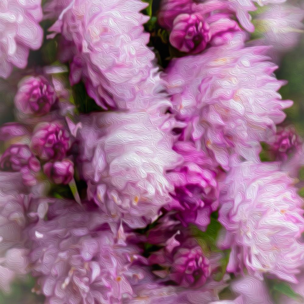 Pink blooms 1 hh4u5s
