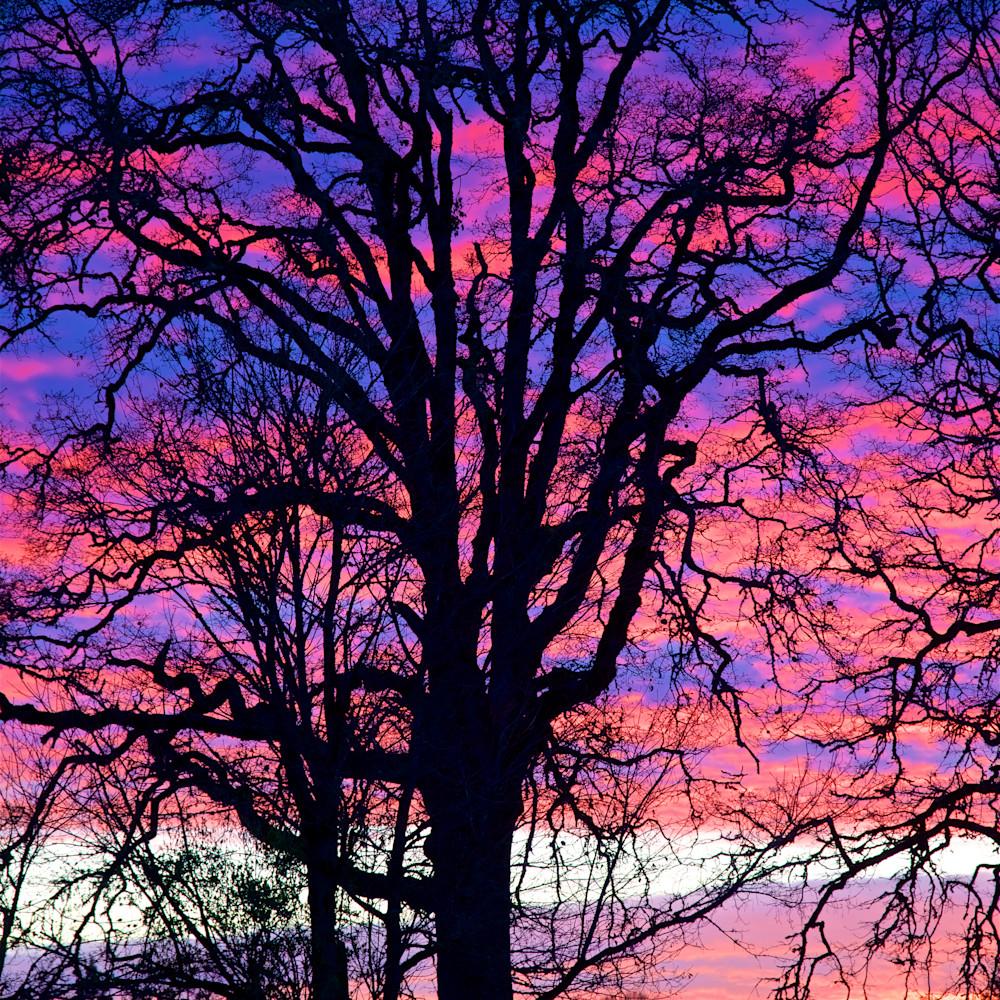 Eugene tree sunset uvqrof