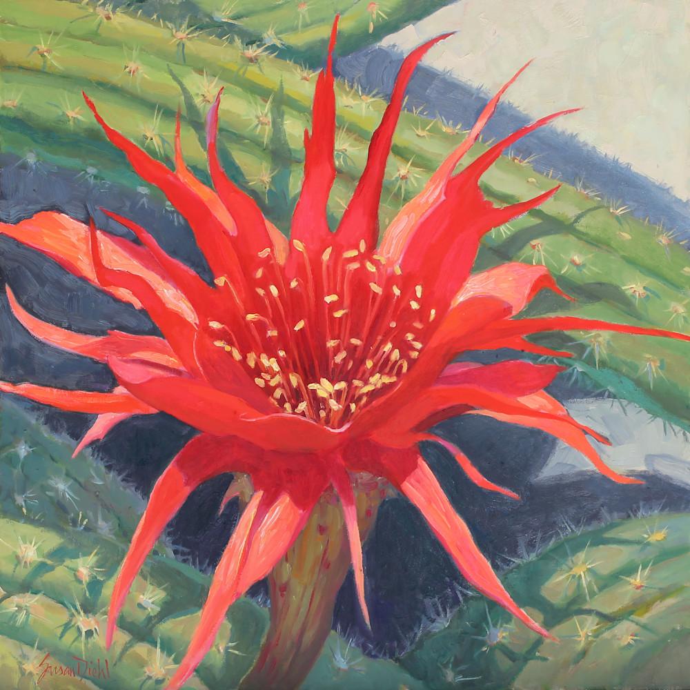 Cactus flower 6 30x30 gigapixel standard scale 2 00x pjd24l