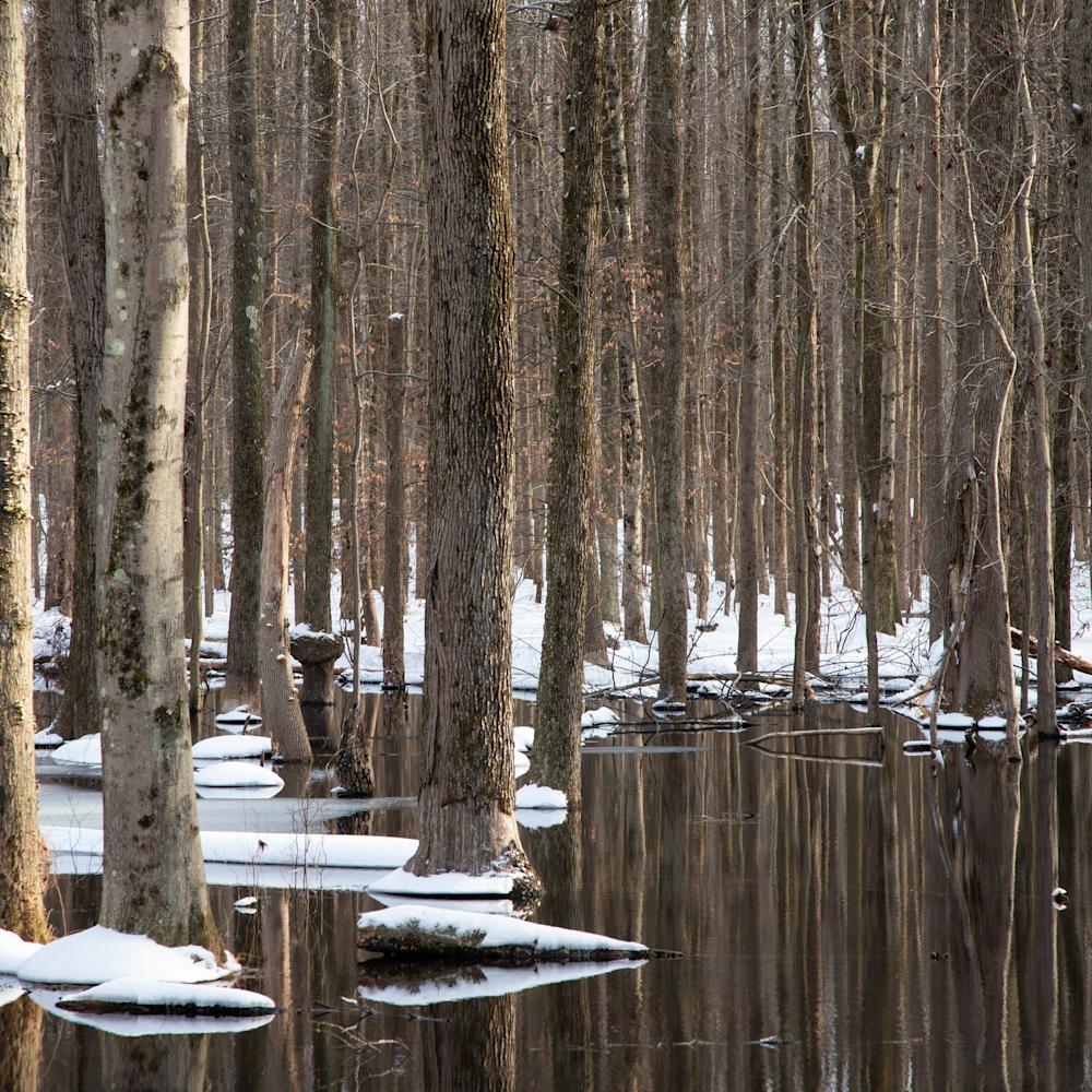 Winteringtrees rplfvj