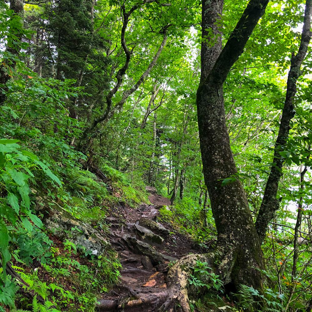 Climbingforesttrail2020 ap6xpi