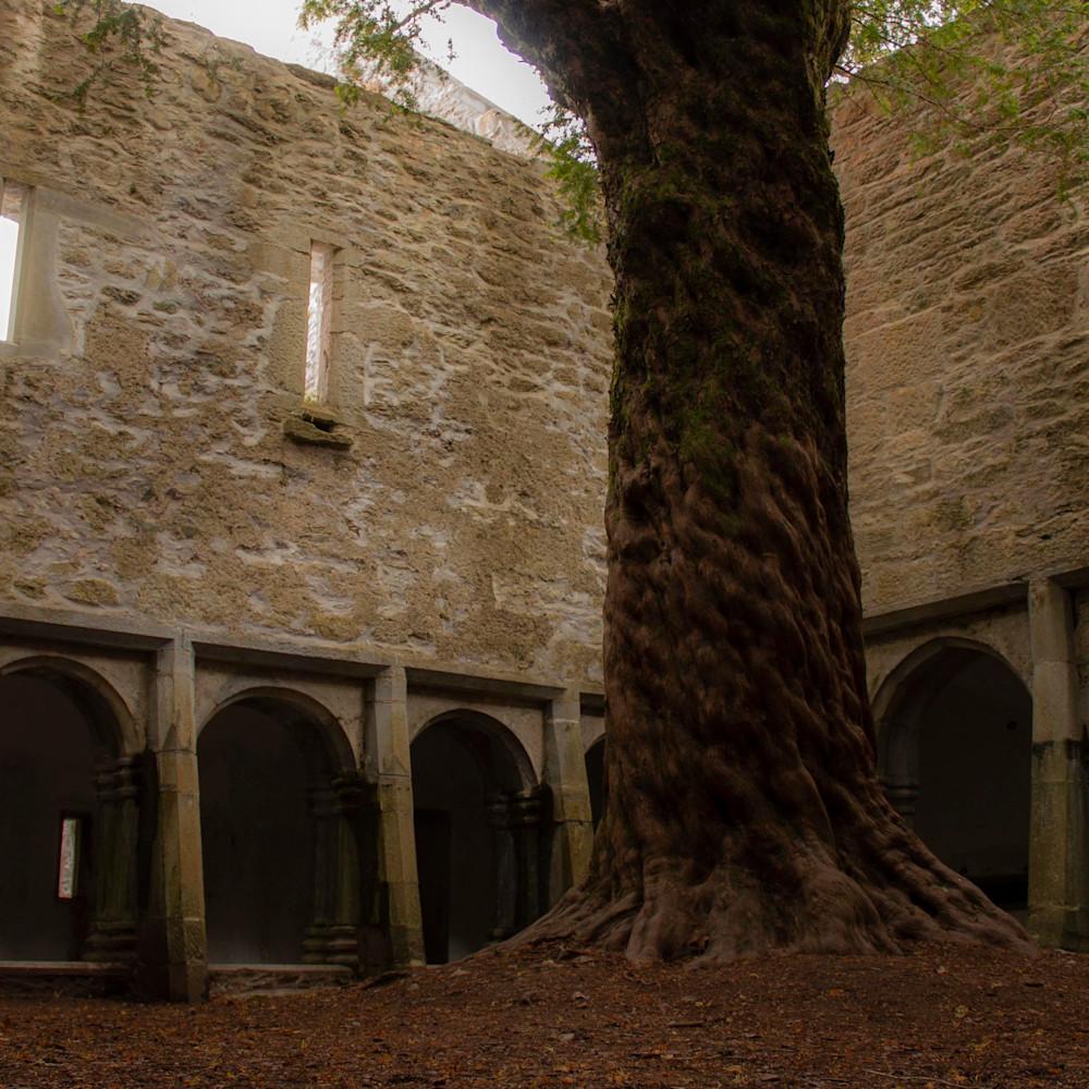 Ancient yew ireland cp0pma