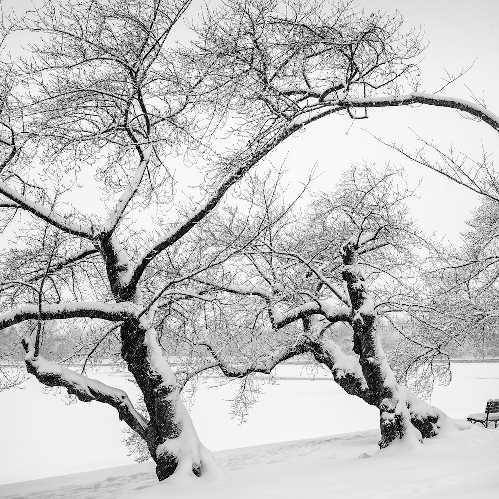 Winter trees bnggpp
