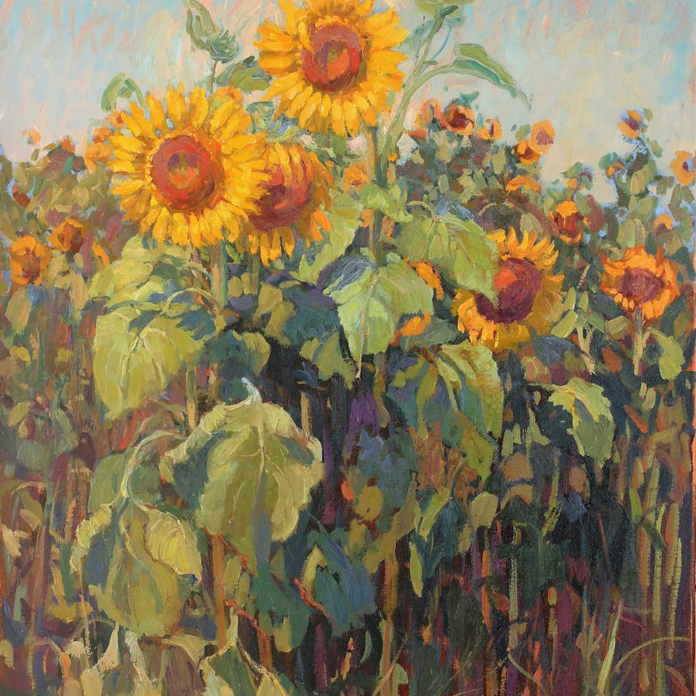 Sunflower stand 30x24 gigapixel standard scale 2 00x okyflb