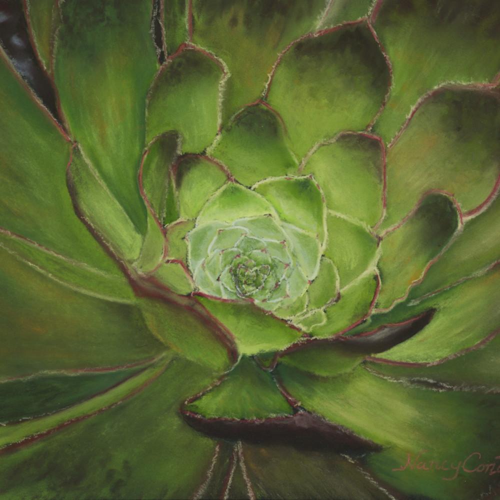 Succulent aeonium arboreum 48 x 36 g94qzj