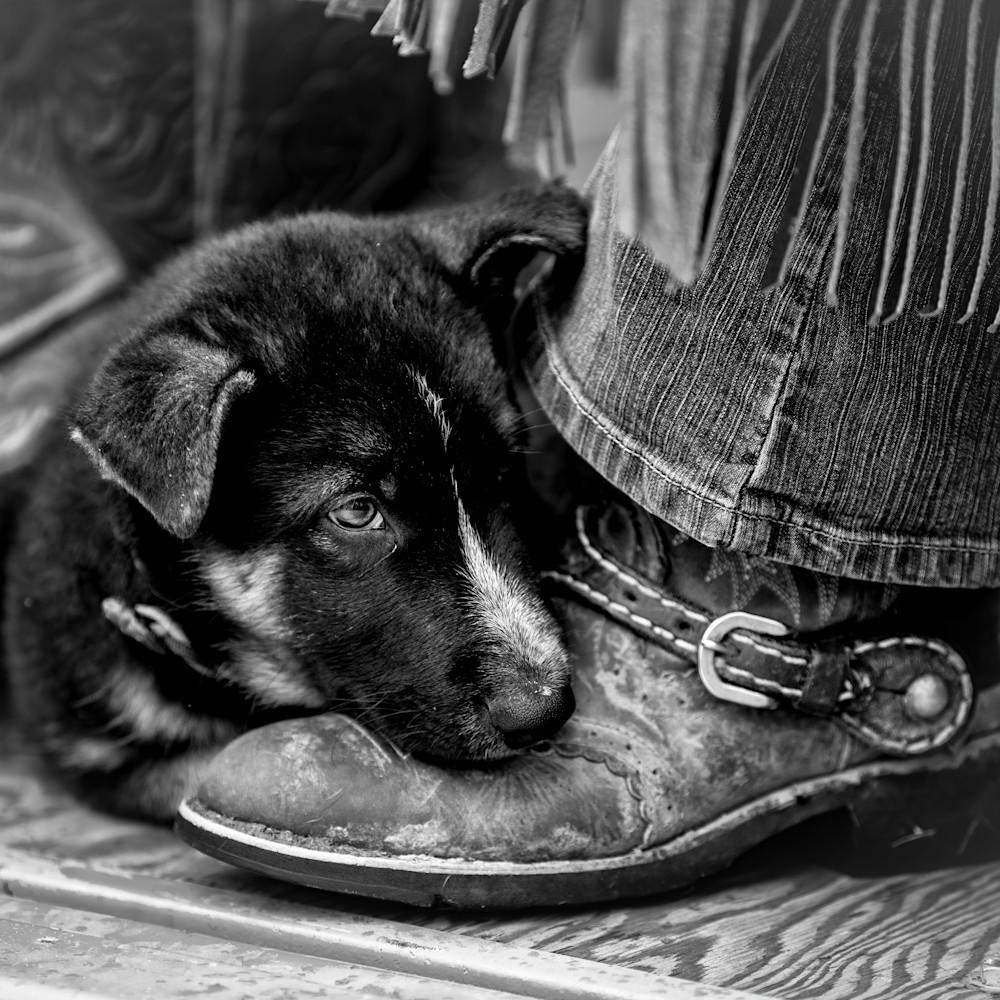 Puppy love wasalh