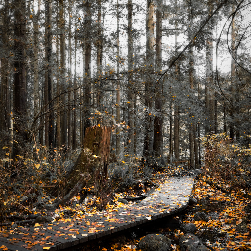 Lynn valley trail ap8k33