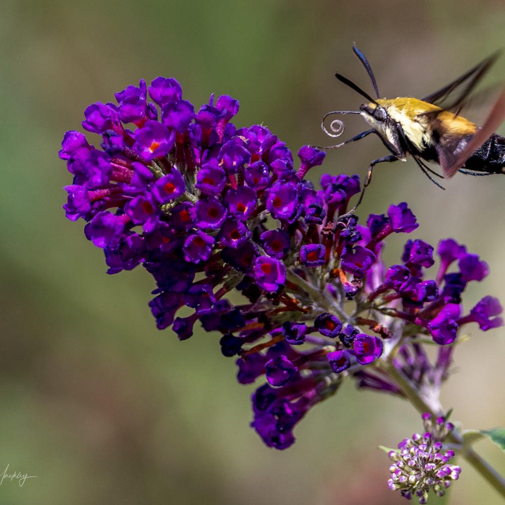 821 butterfly farm 1147 edit zldexe