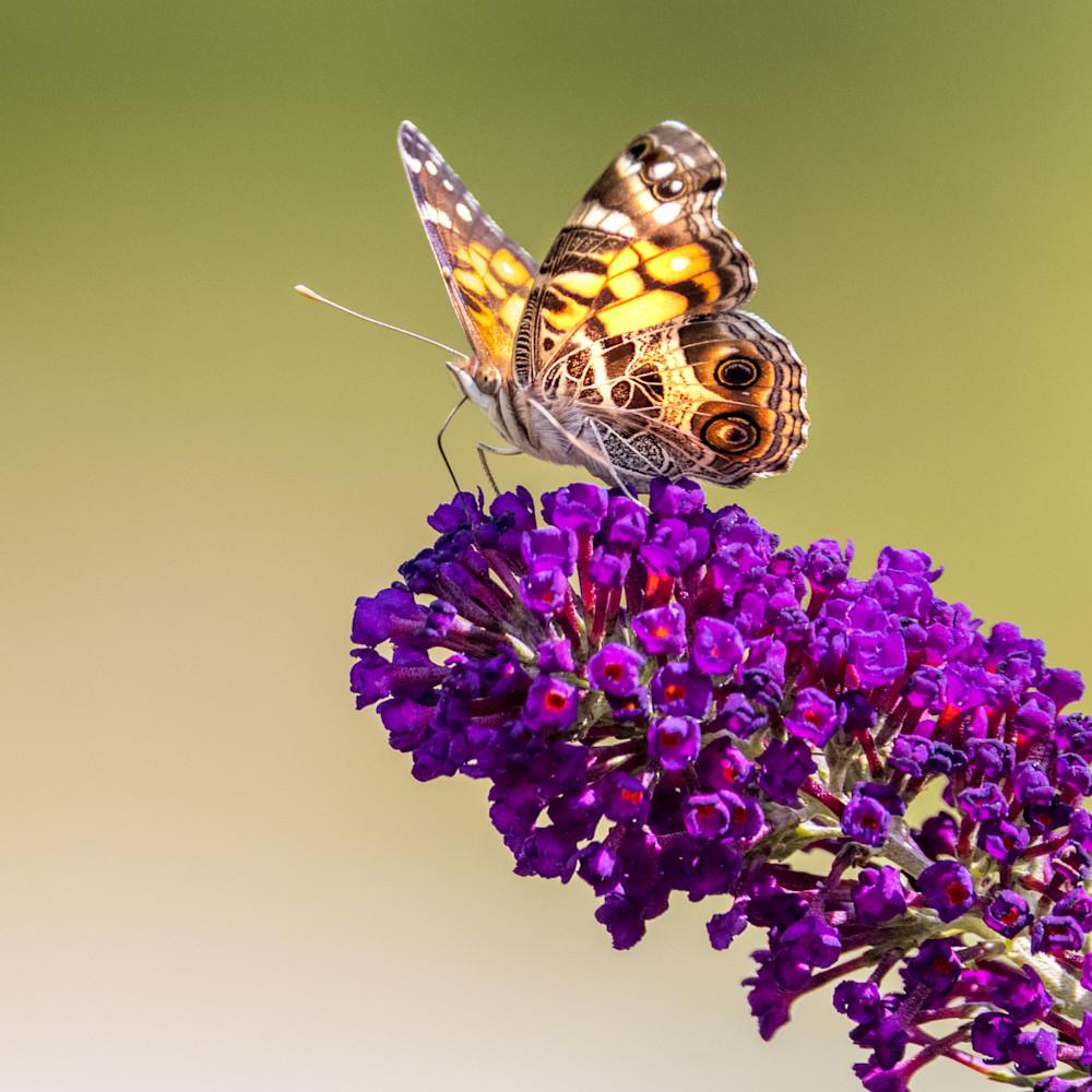821 butterfly farm 1177 uip9na