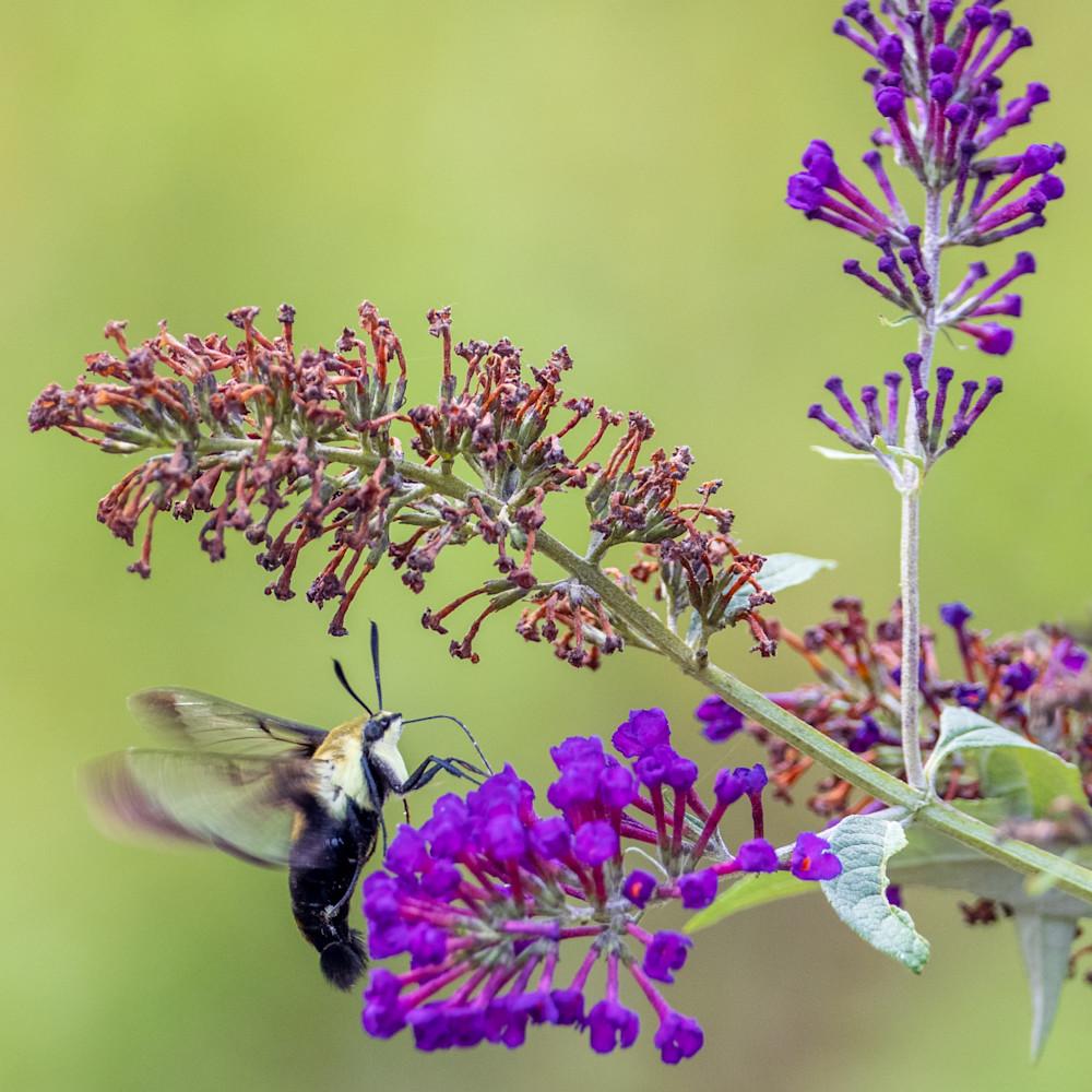 821 butterfly farm 945 edit c9k3ca