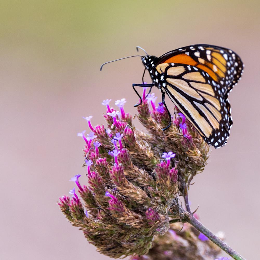 821 butterfly farm 571 edit t5cpwz
