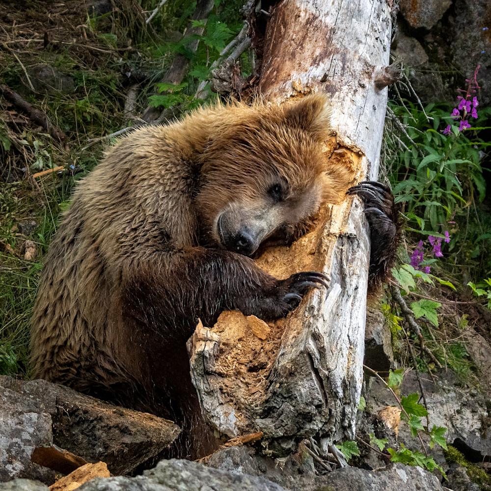 Tree hugger ratywy