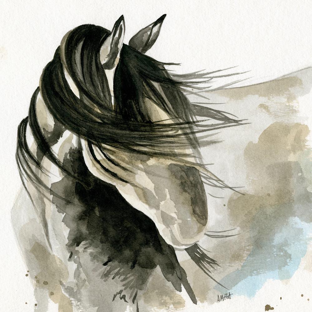 Shy horse acsoqp