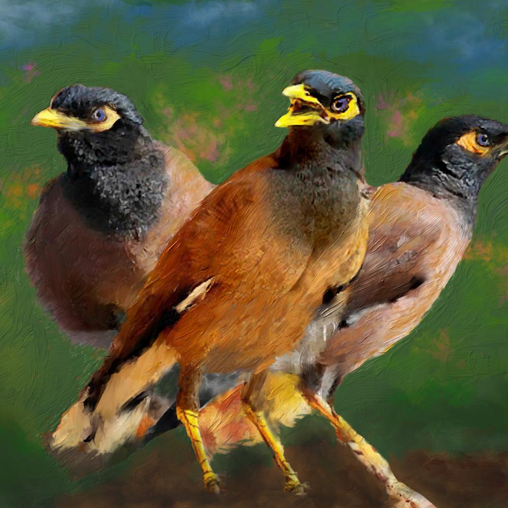 Mynah birds2 ymjylv