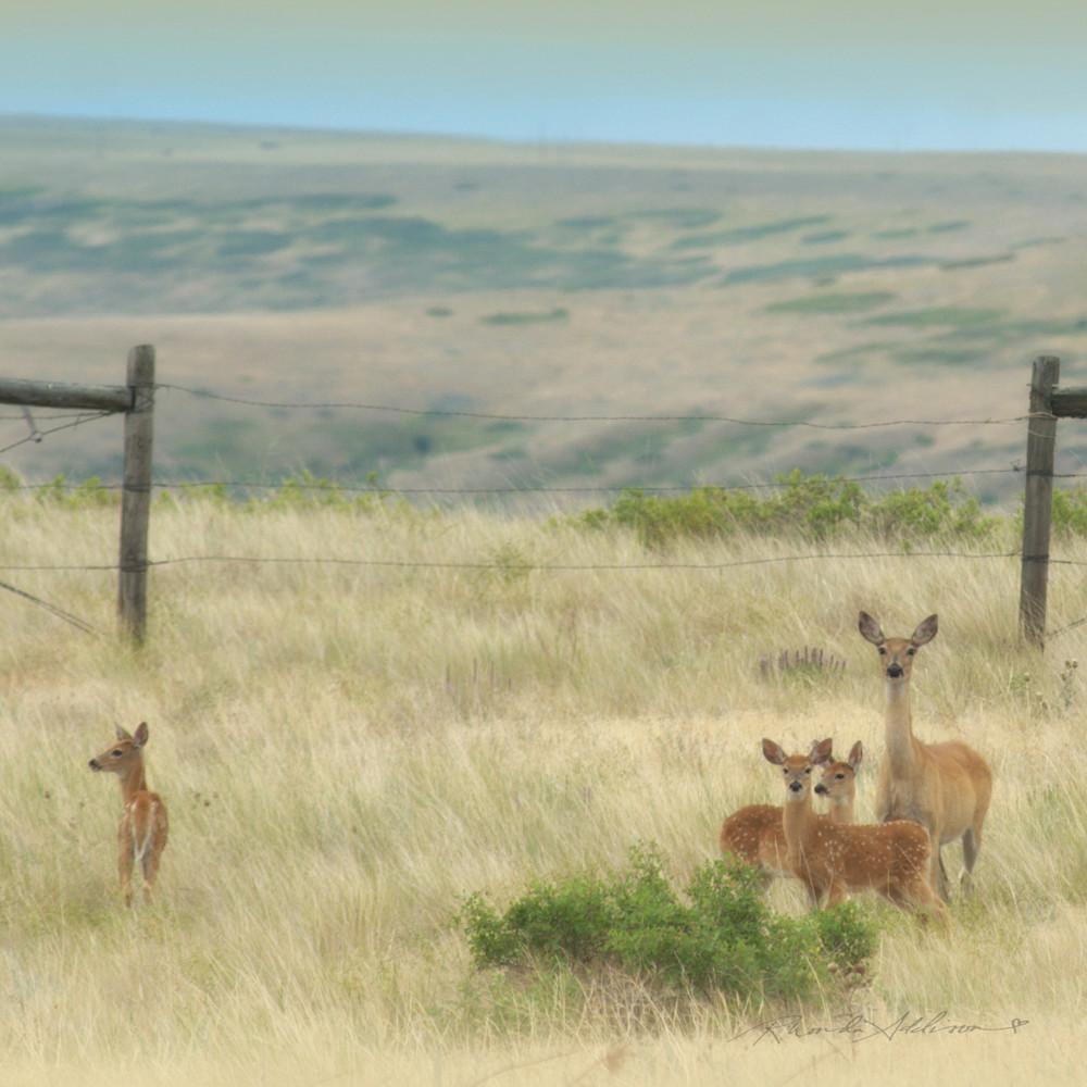 Deer mom and 3 fawnss jpg btljot