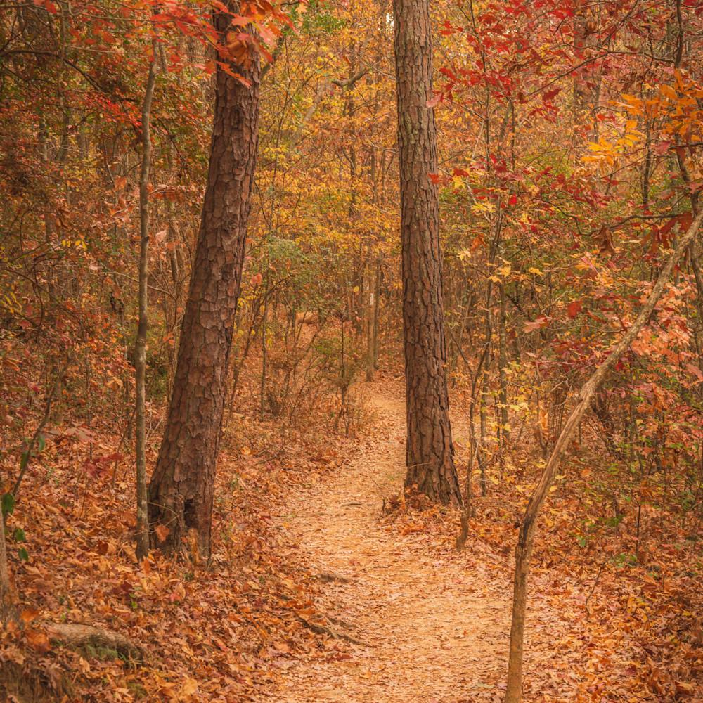 Path in the woods hw6bji