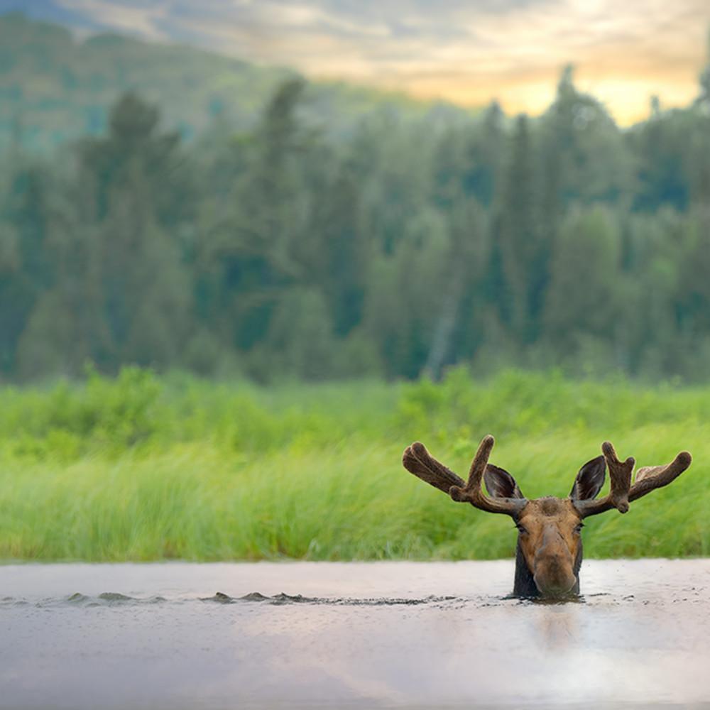 Mystical moose ntb434