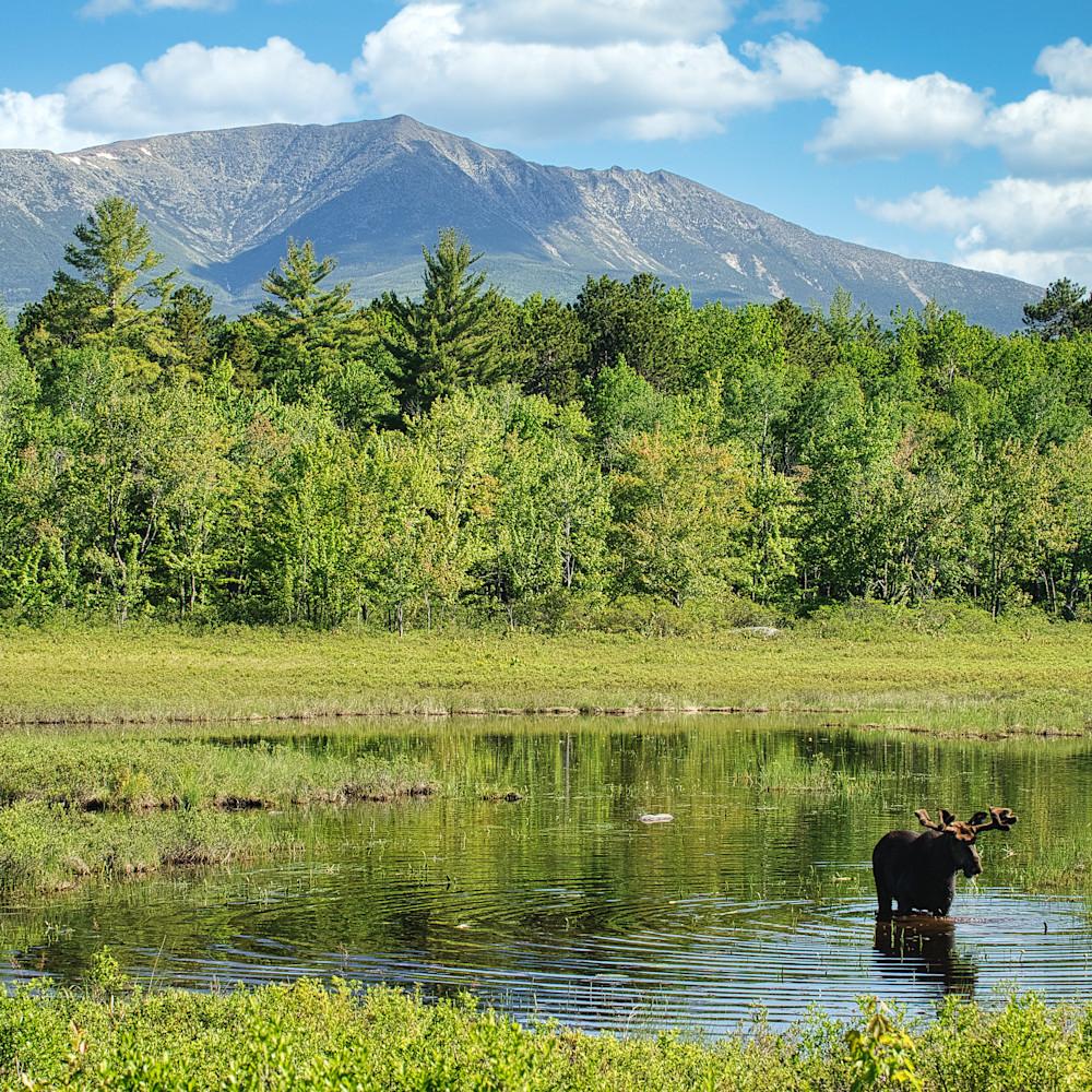 Mt katahdin and bull moose zlsyp8