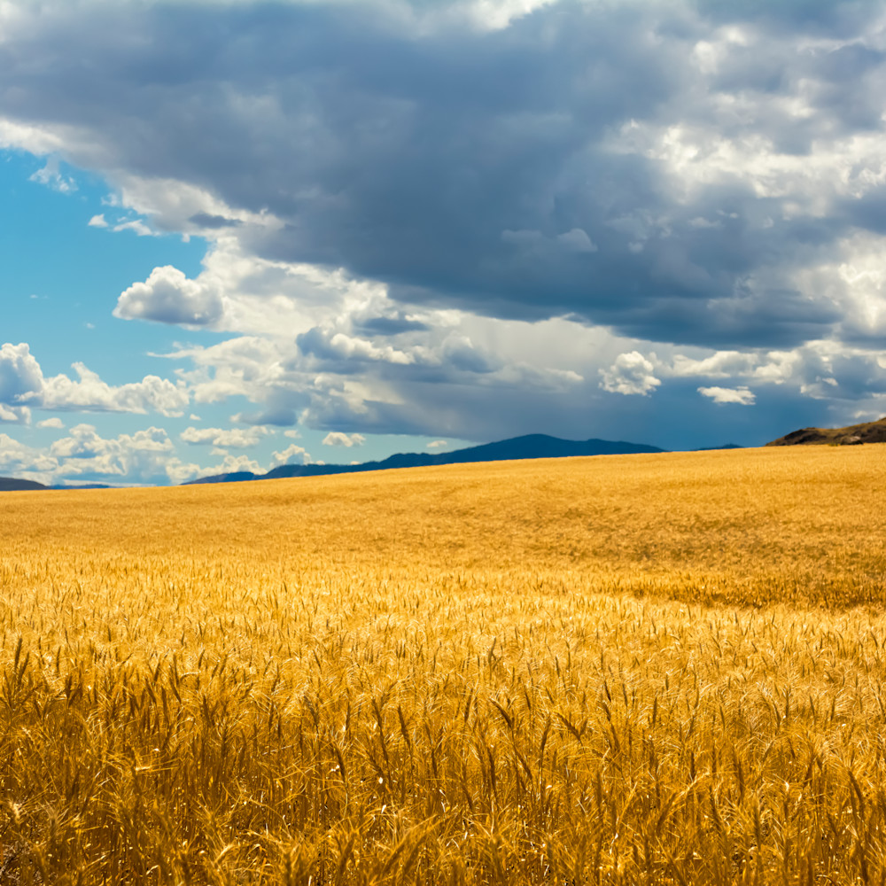 Fields of gold 1 jy7ckw