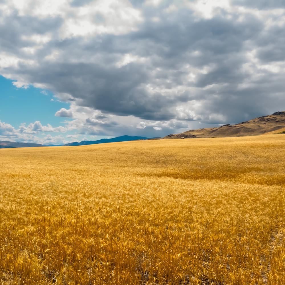 Fields of gold 2 k6ljph