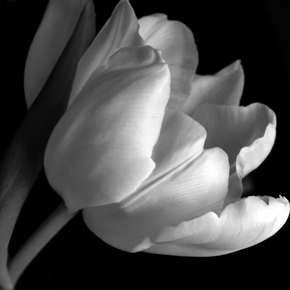 B w tulip w7xtkb
