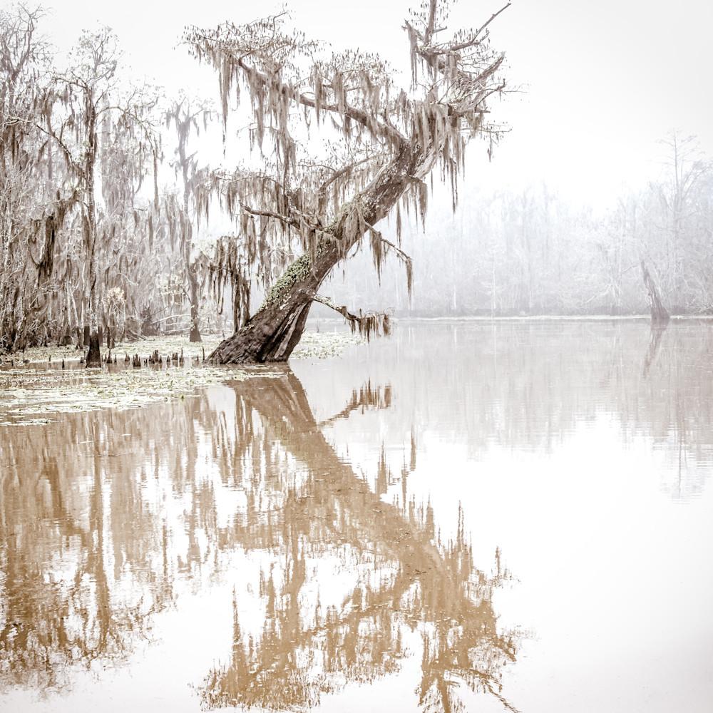 Andy crawford photography maurepas swamp 20171221 8 jtlbpd