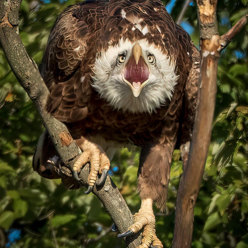 The eagle screams   cover ref0ty
