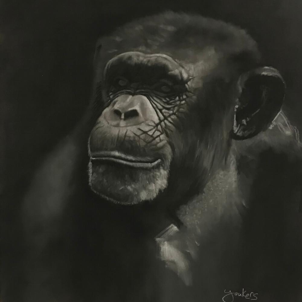 Chimp qpx5ab