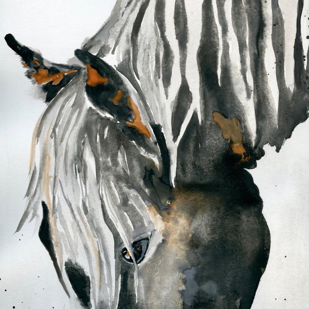 Large dark horse head down wbayyh