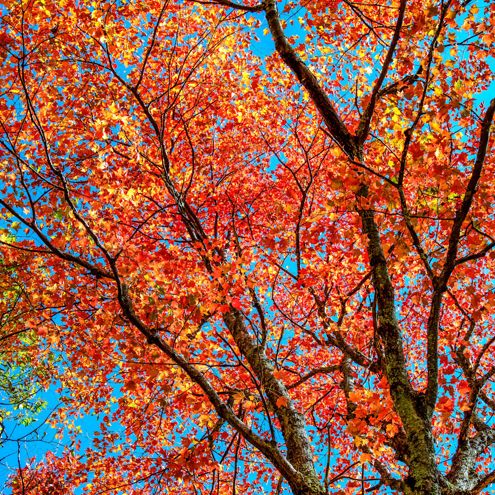 Andy crawford photography autumnal abstract hesjkj