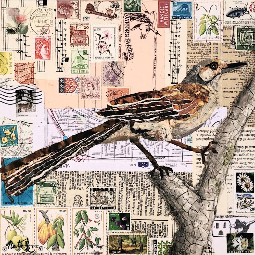 Northernmockingbird 300 33x33 tngoqm