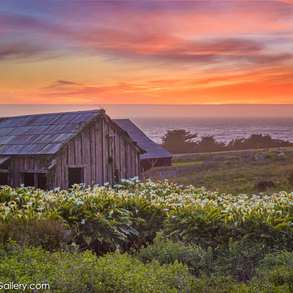 Spring bloom sea ranch tlmtvz