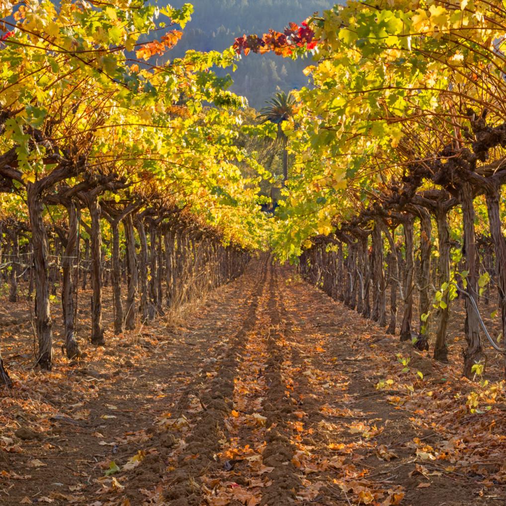 Autumn vines zabec3